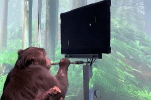 Elon Musk's implant firm teaches monkey to play Pong with its mind